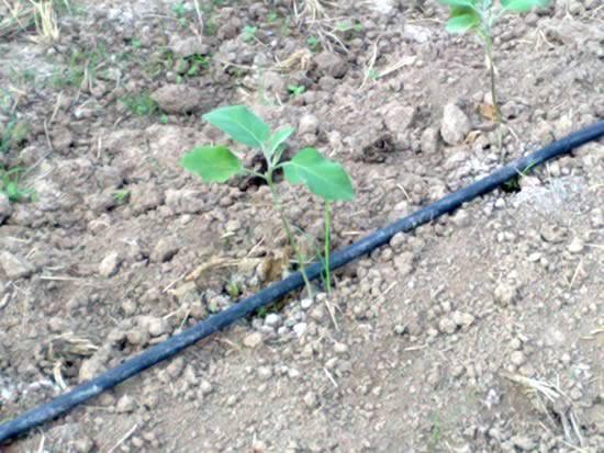 苗木灌溉工具